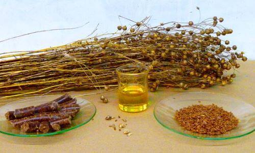 plantas-medicinales-sanar-hemorroides