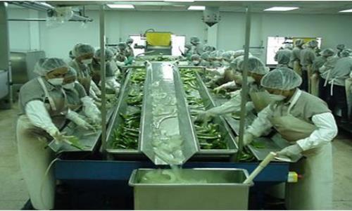 Proceso de fabricación crema de aloe vera