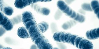 Beneficios de los probiótics y prebióticos