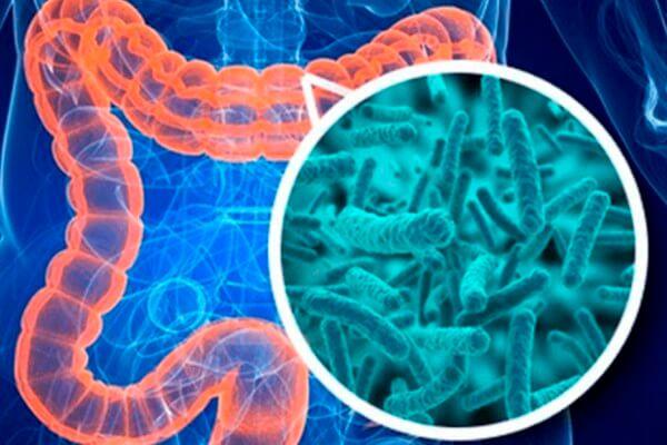 qué son los probióticos