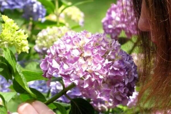 Beneficios de una flor para tu vida